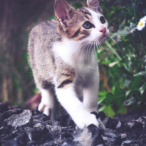 white brown cat walking in forest
